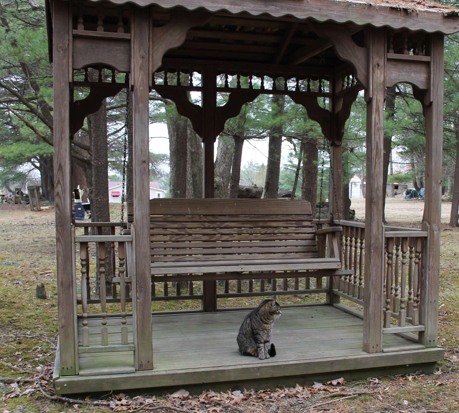 Gazebo at Blue Spruce with Kitty
