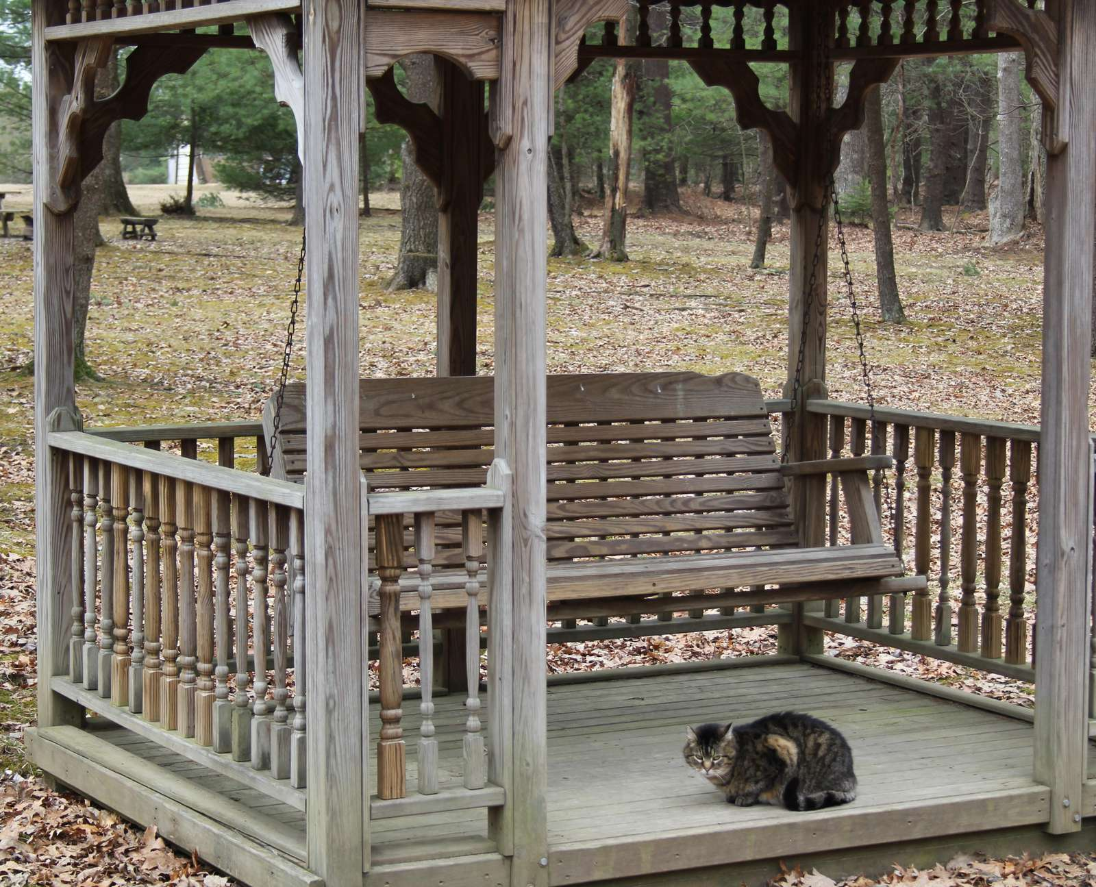 Gazebo with Kitty at Douglas Fir Cabin
