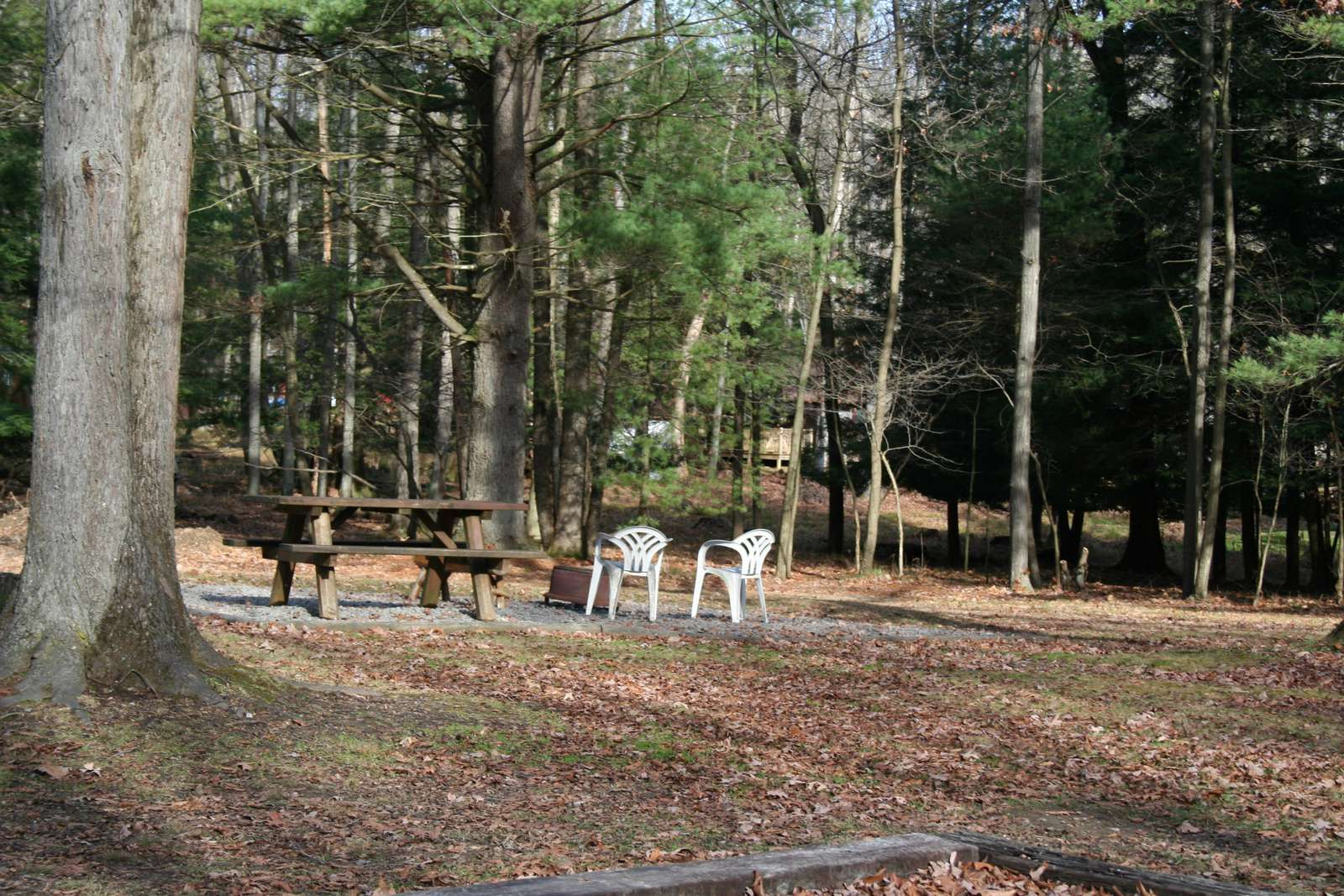 Picnic area at Old Hickory Cabin.