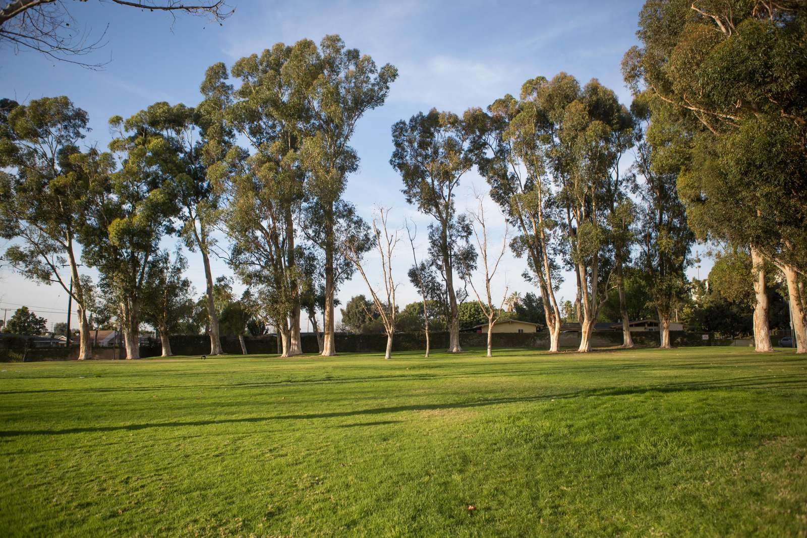 Huge Grass Area to play and stretch those legs