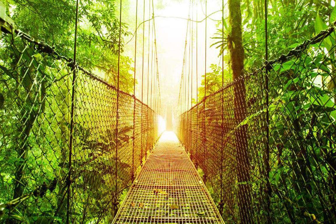 Rain Forest adventures