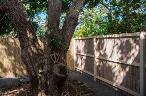 Shared backyard with mango tree