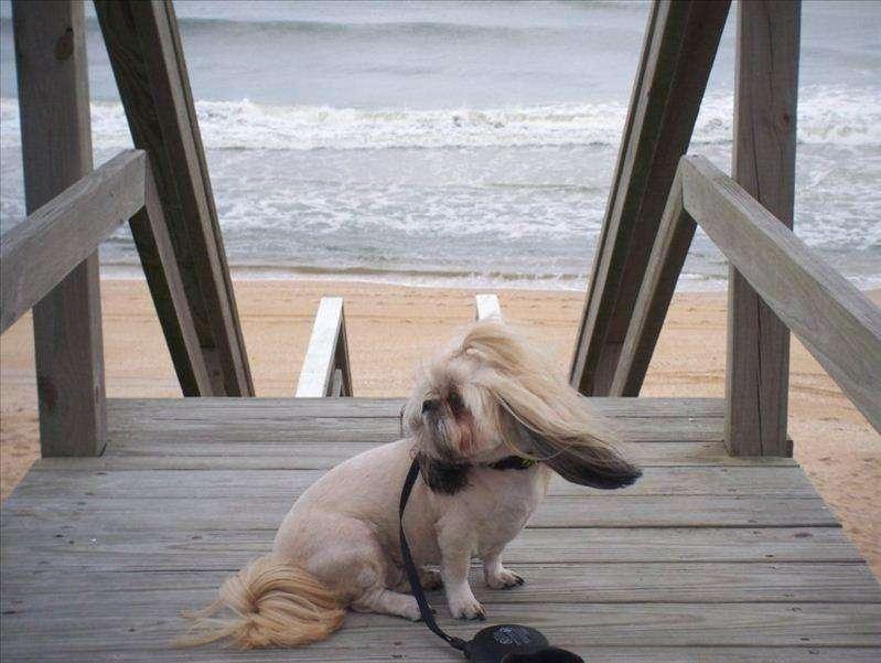 CoCo enjoying the Ocean Breeze on the Community Boardwalk!