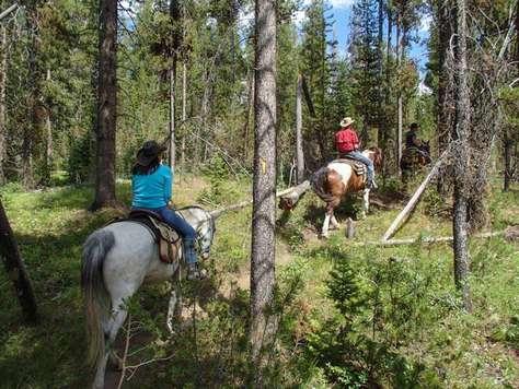 Horseback ride in Yosemite Valley.