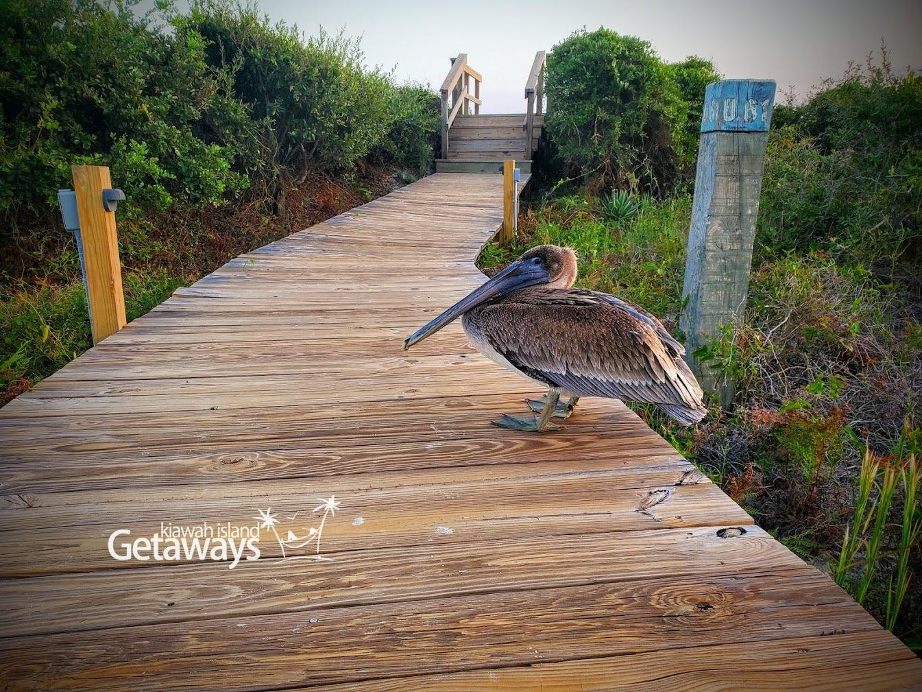 Boardwalk to the Beach - 7-minute walk