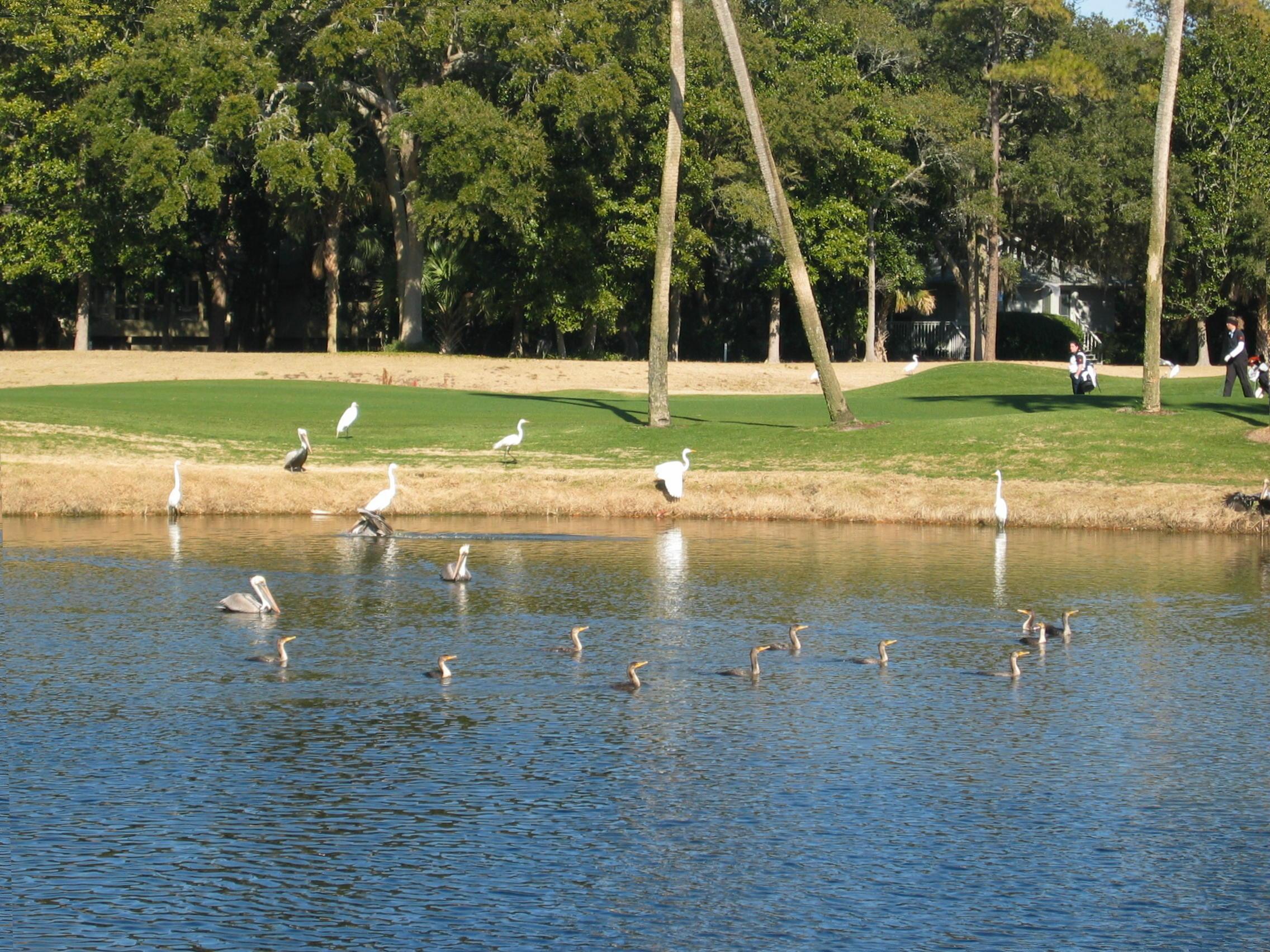 Birds of All Kinds Enjoy Kiawah's Lagoons