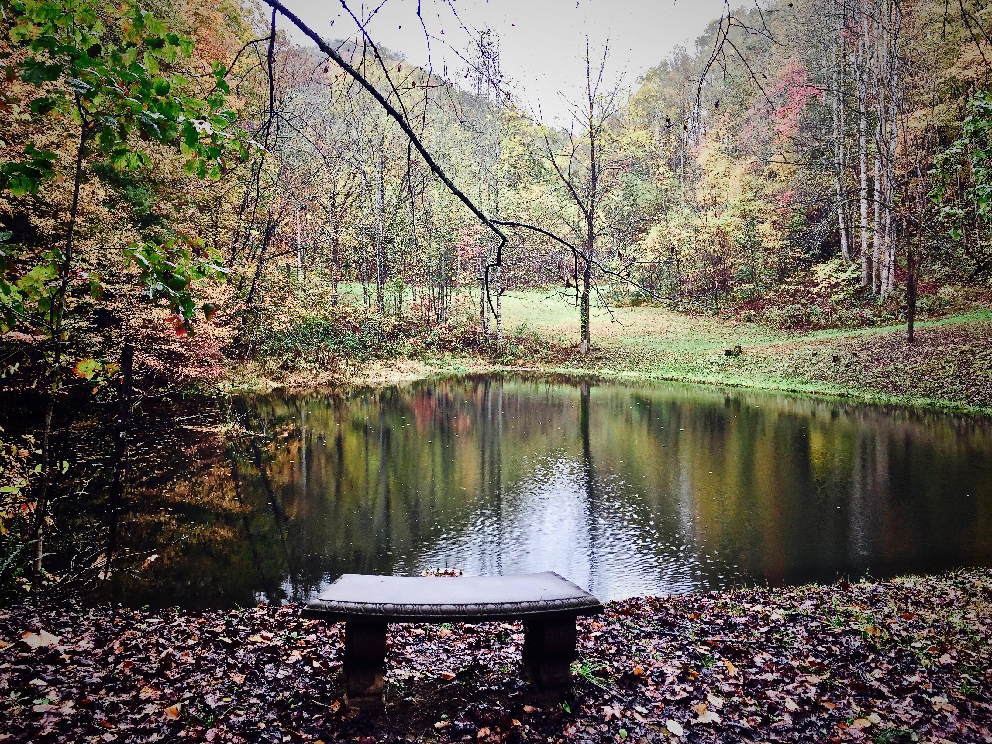 Bring your Poles, there is a great Fishing Pond, just a few minutes walk from the Cabin!