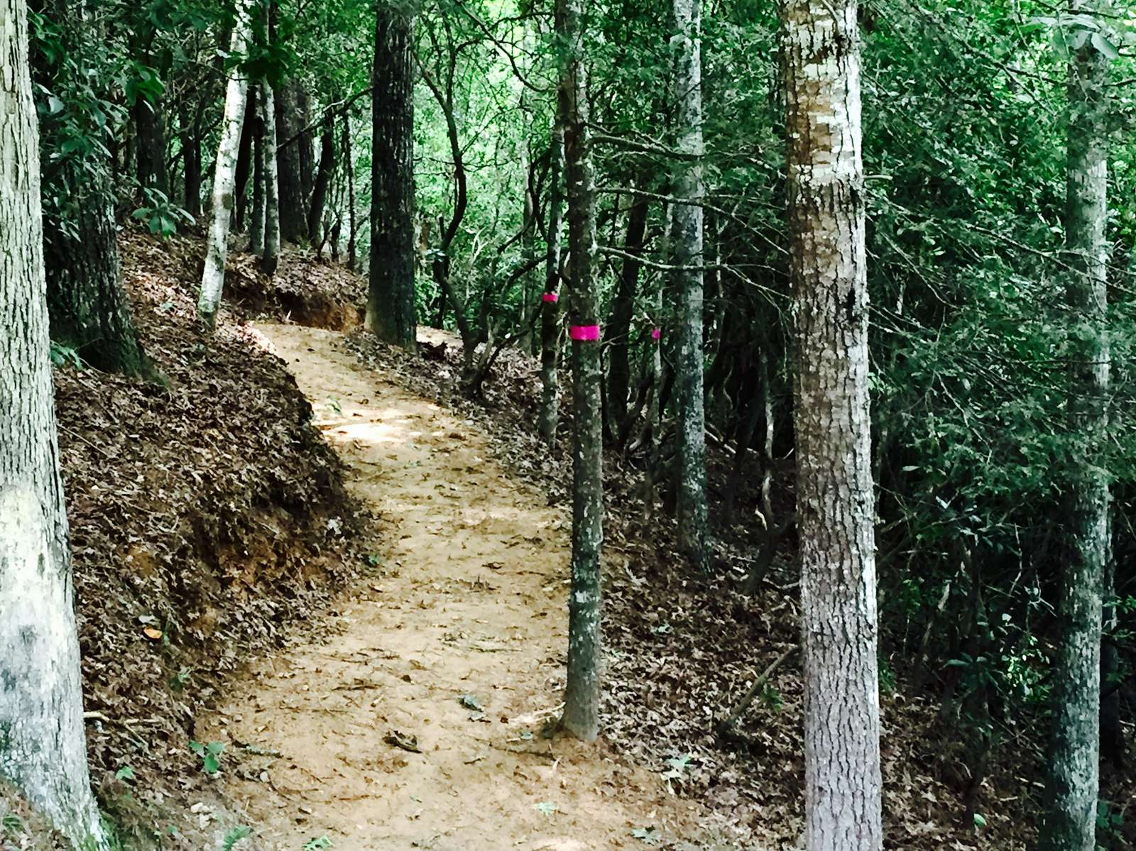Newly upgraded Nature trail meanders through the acreage ...