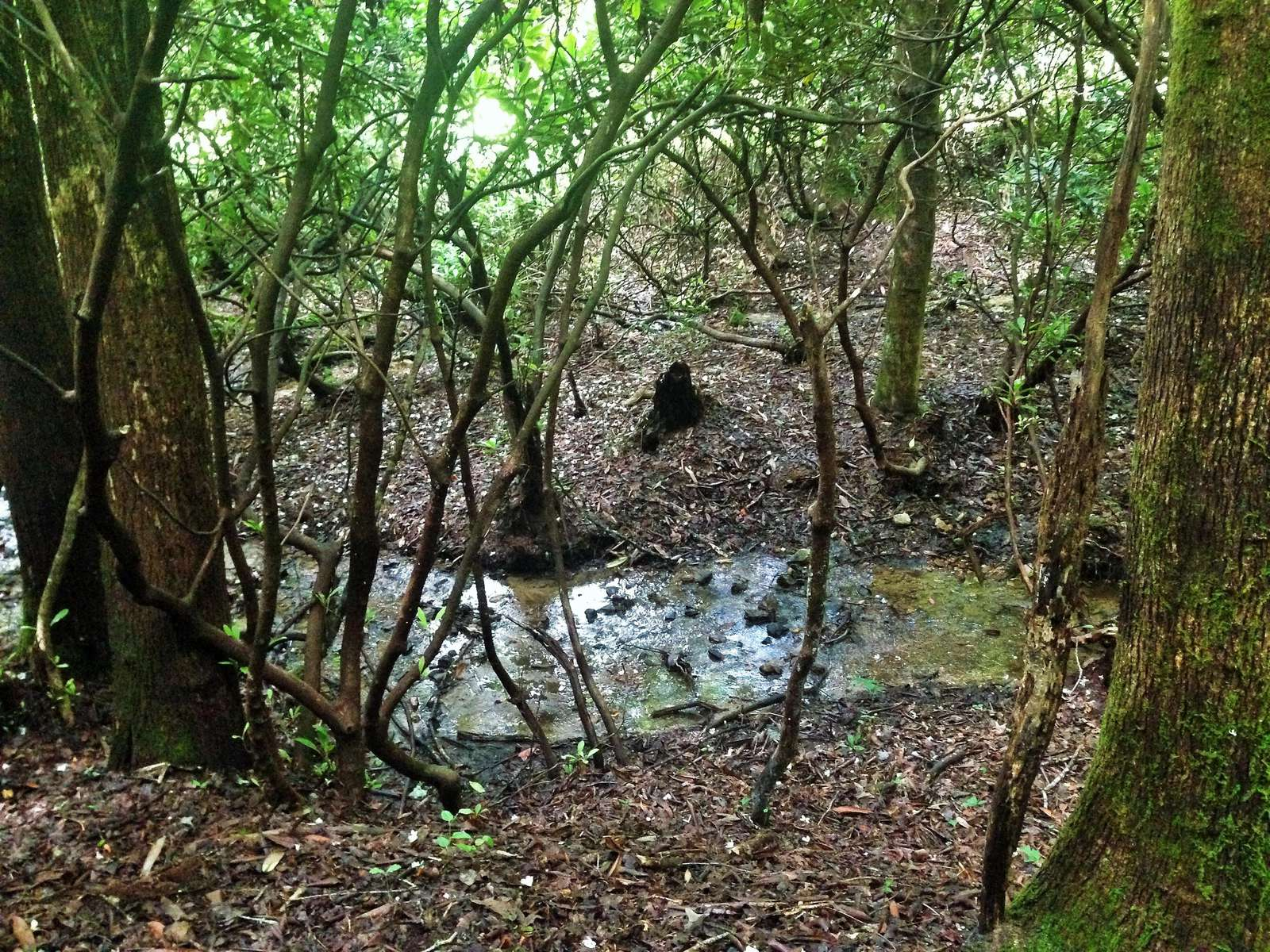 The trail from the back yard leads to a lovely little Creek under a canopy of shade trees