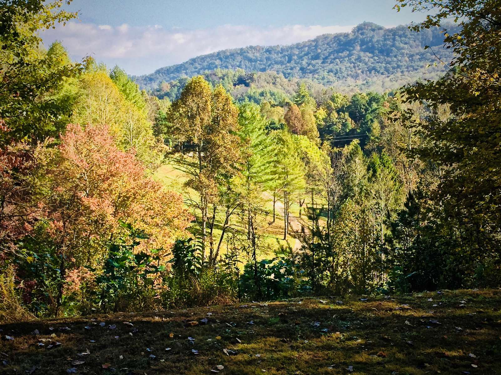 Large Flat Yard, and on the left, a Hiking trail that meanders through the Forest and leads to a Table along side a small Stream...