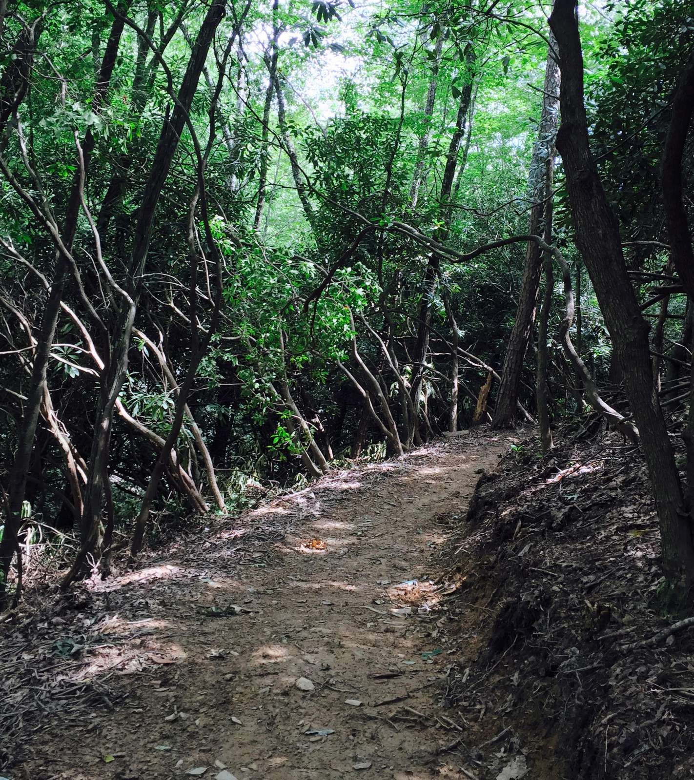 Your Private Nature Trail leads to a little Creek below...