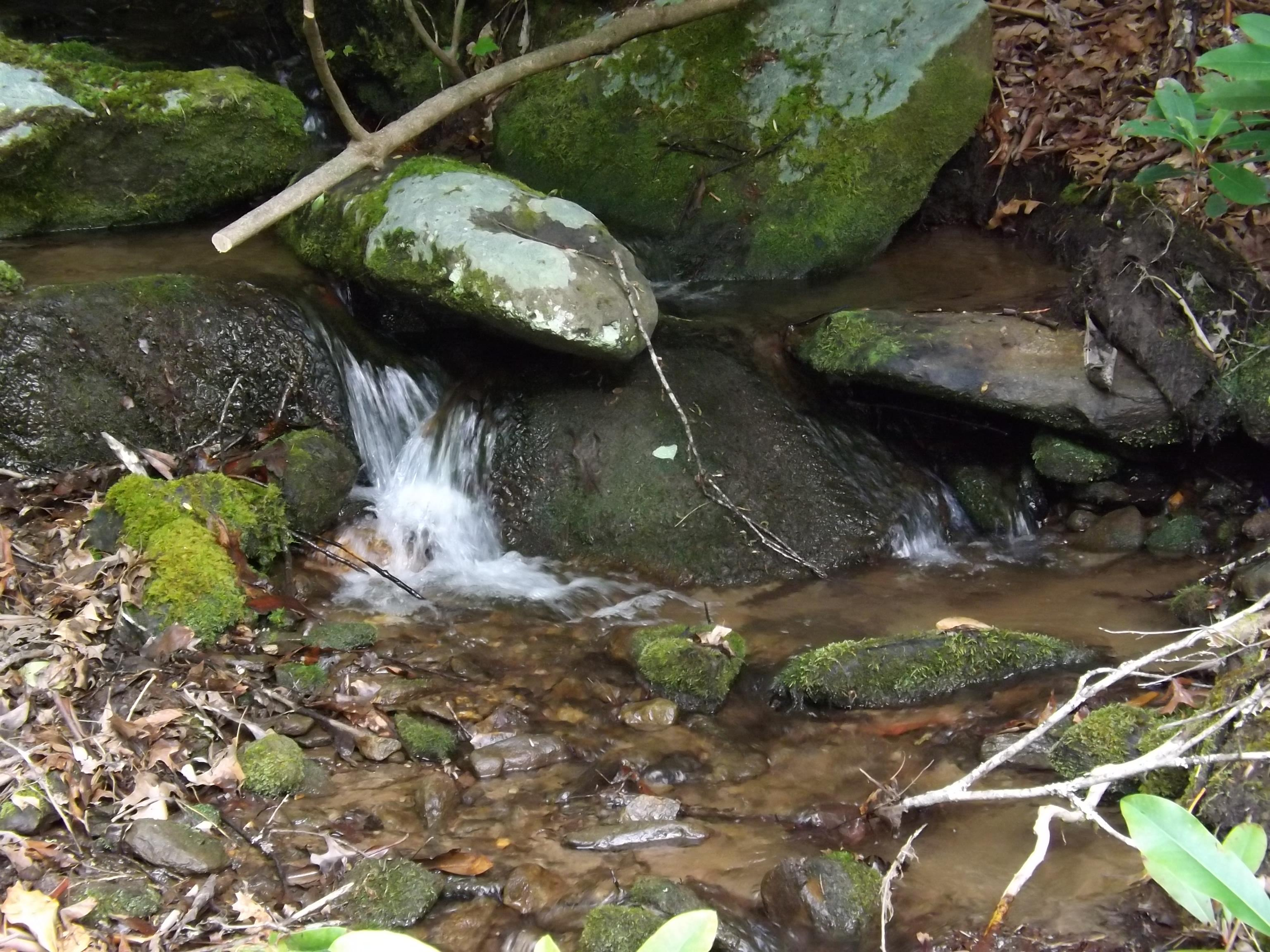 Creek sounds are ever present and soothing!