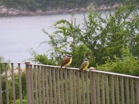 Plenty of birds and marine life to see in Huatulco