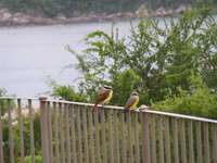 Plenty of birds and marine life to see in Huatulco thumb