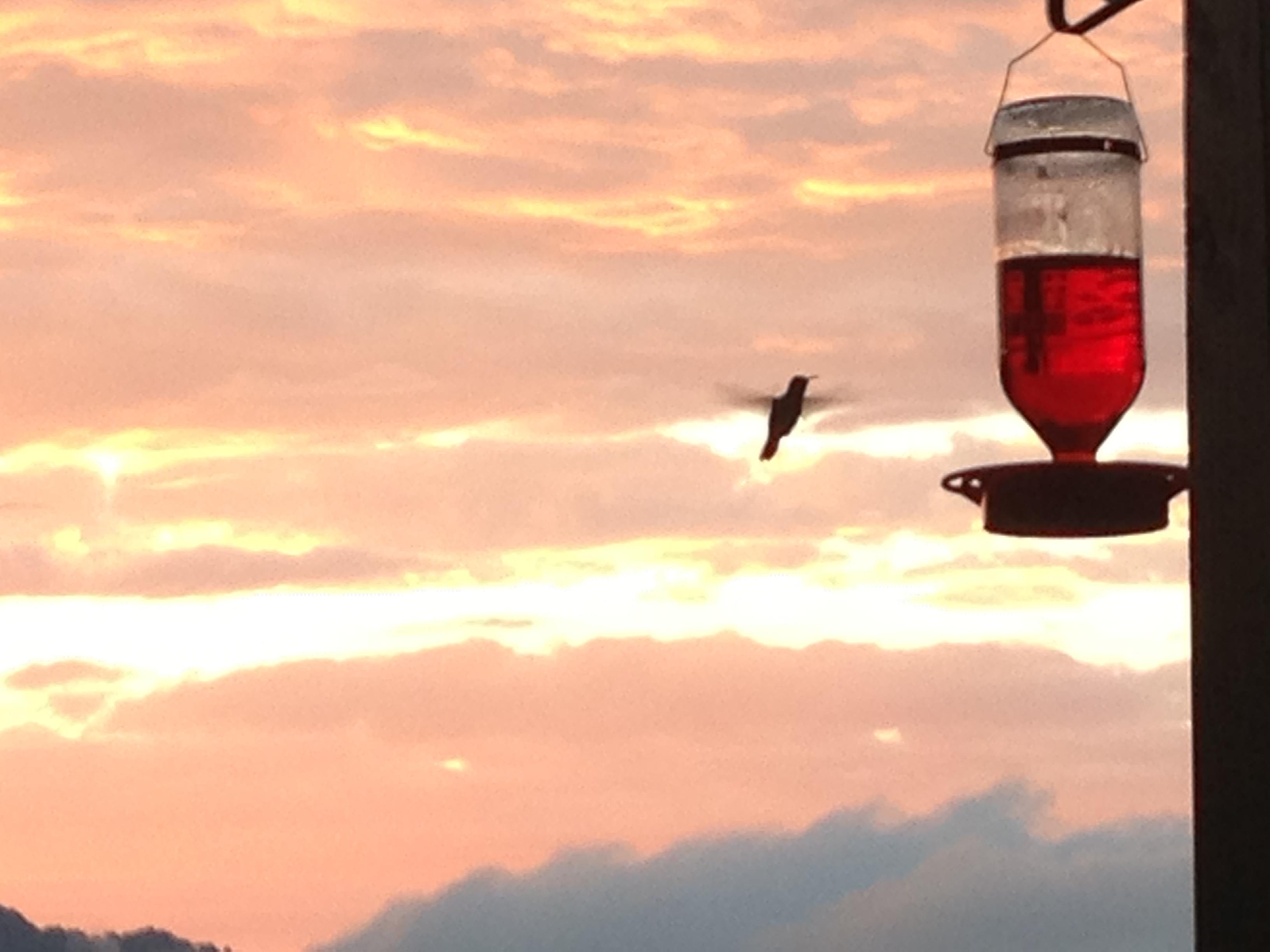Hummingbirds just Love the feeder and the plants surrounding the Cabin!