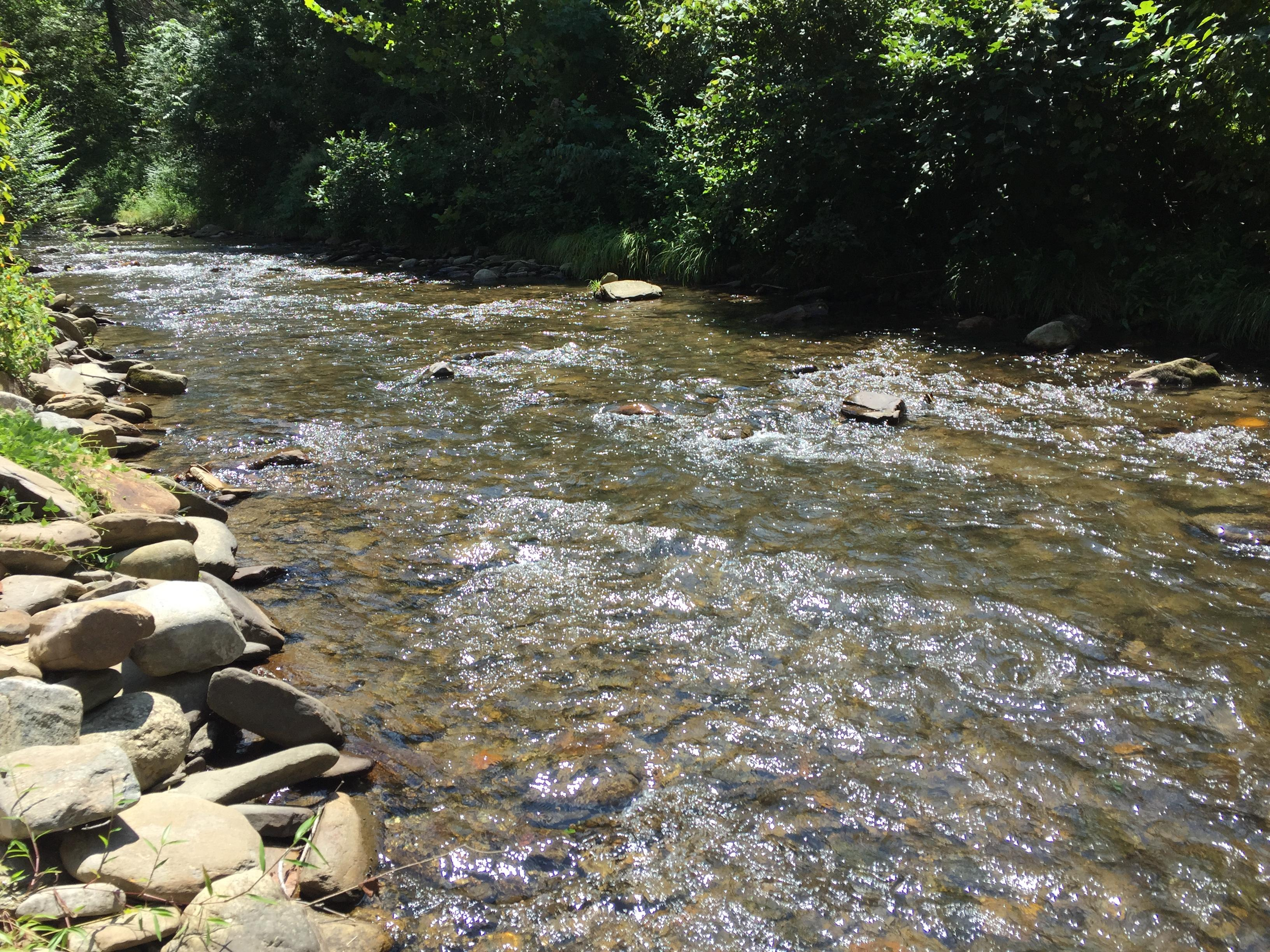 Looking to the opposite side of the Creek, surrounded by Nature! (Photo taken from the Fire Pit)