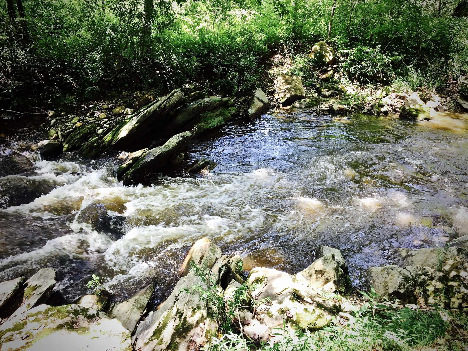 Trout Stocked and Hatchery Supported, Alarka Creek