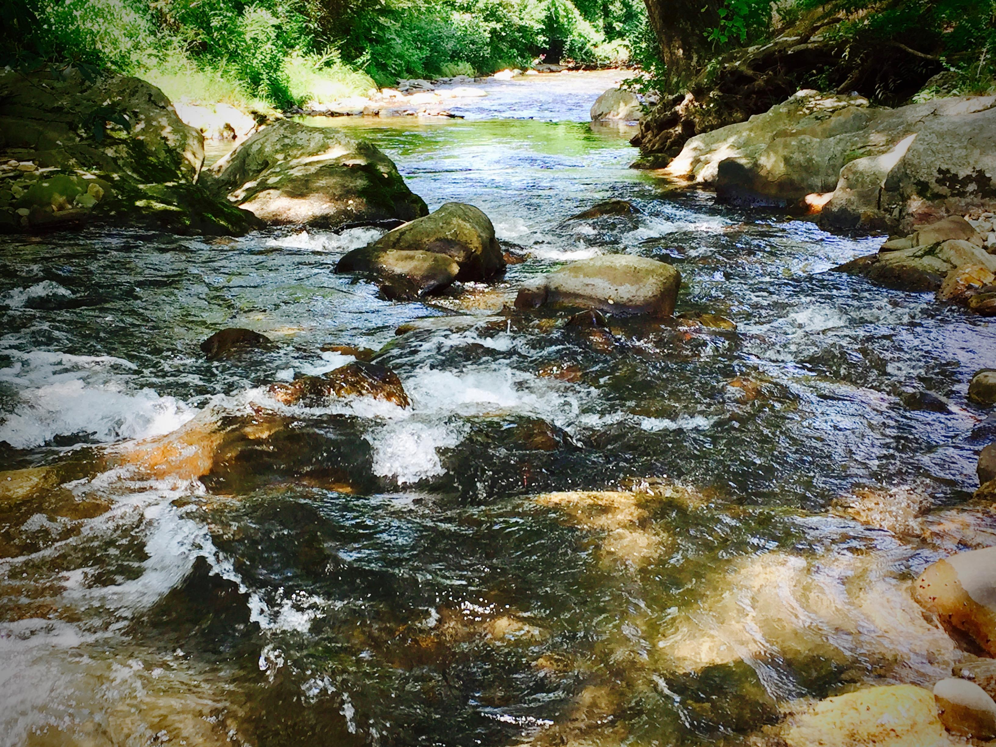 """Alarka Creek is Crystal Clear! The ideal """"Catch and Eat"""" Trout Stream..."""