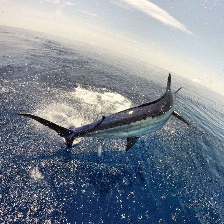 Exciting deep sea fishing!  We have many charter boats available to rent.