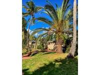 Tropical landscaping throughout thumb