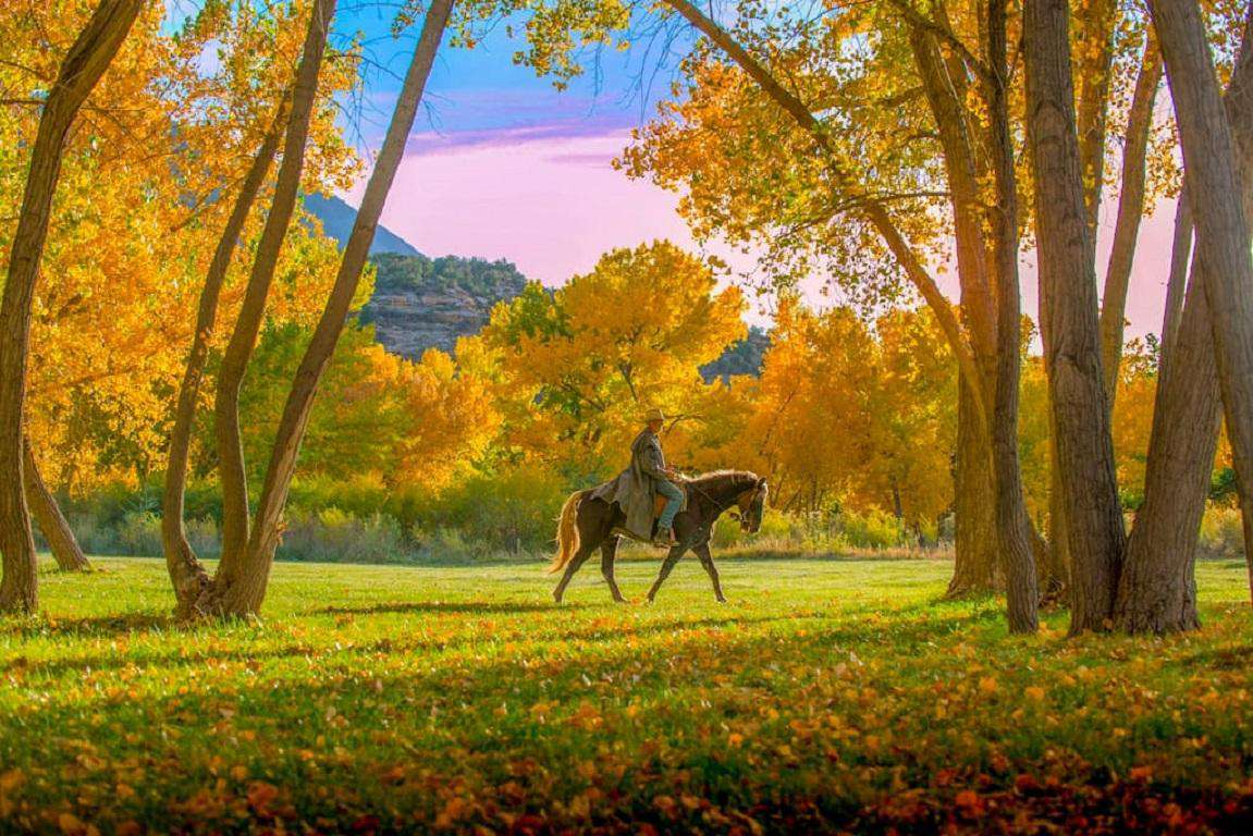 """5-Star horseback rides available 3 miles away into the remote """"Canyon of the Ancients National Monument."""" This photo was taken on our property in the fall. More: info@canyontrailsranch.com"""