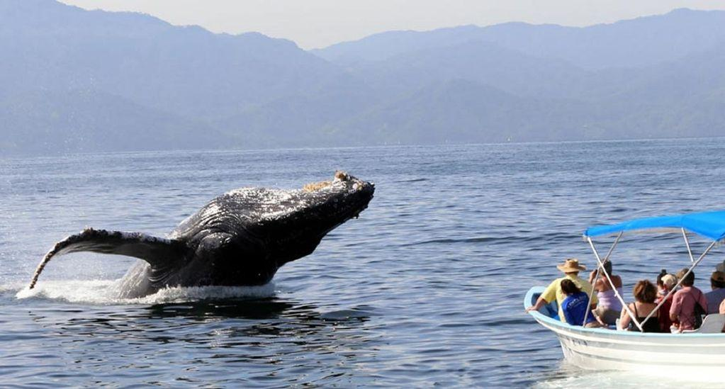 Whale watching from Olas Altas pier just five minutes away