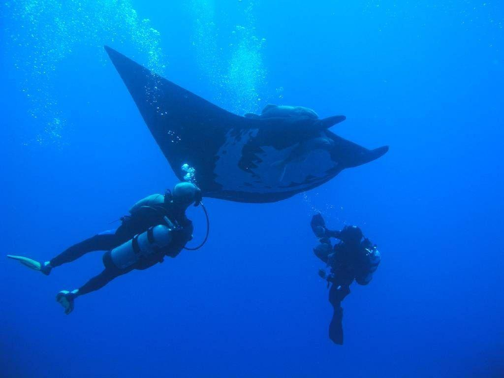 Certified PADI diving from Olas Altas pier