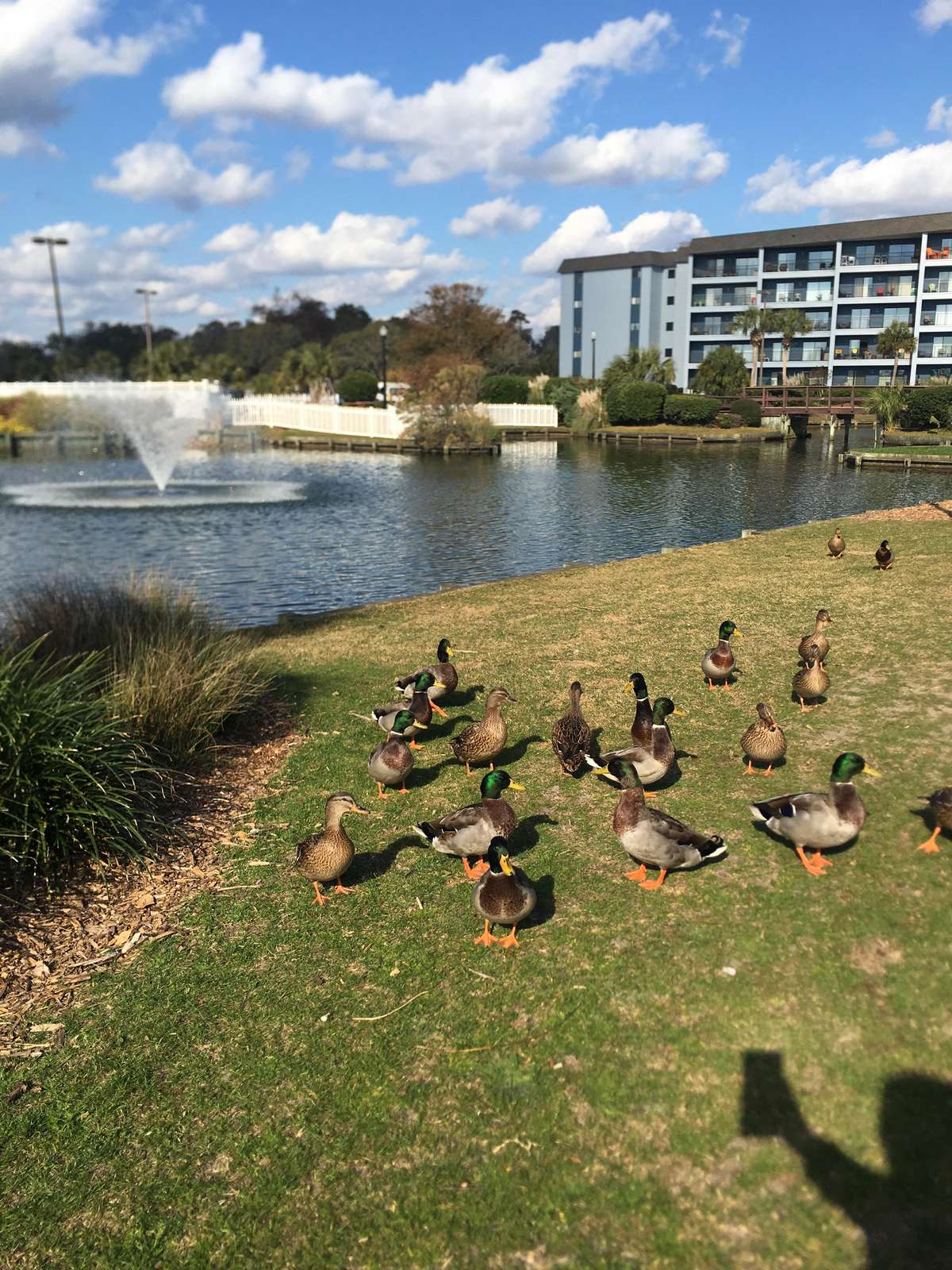 Feed the Ducks at one of many lakes