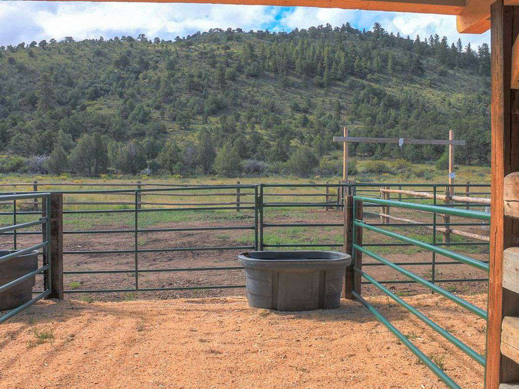 View from barn stall to the National Forest to the south.