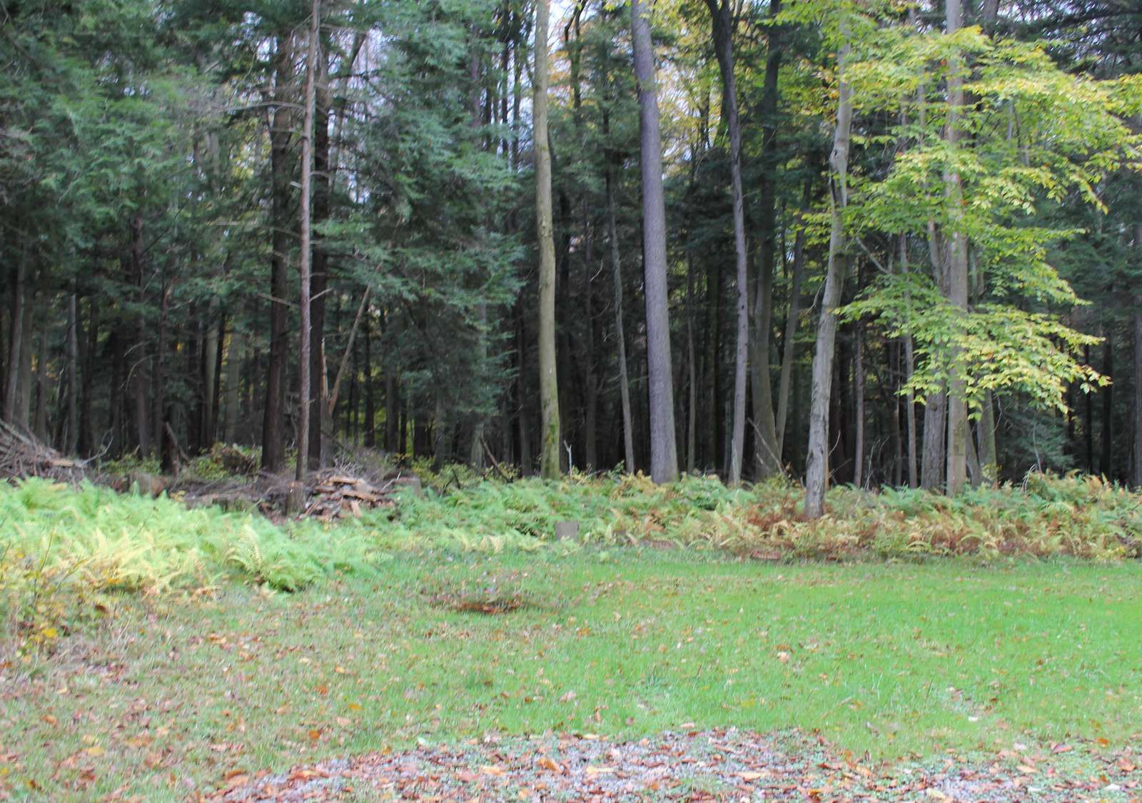 Woods Back of Cabin