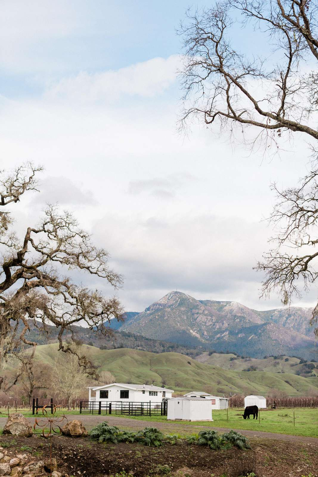 Mt. St. Helena in the background