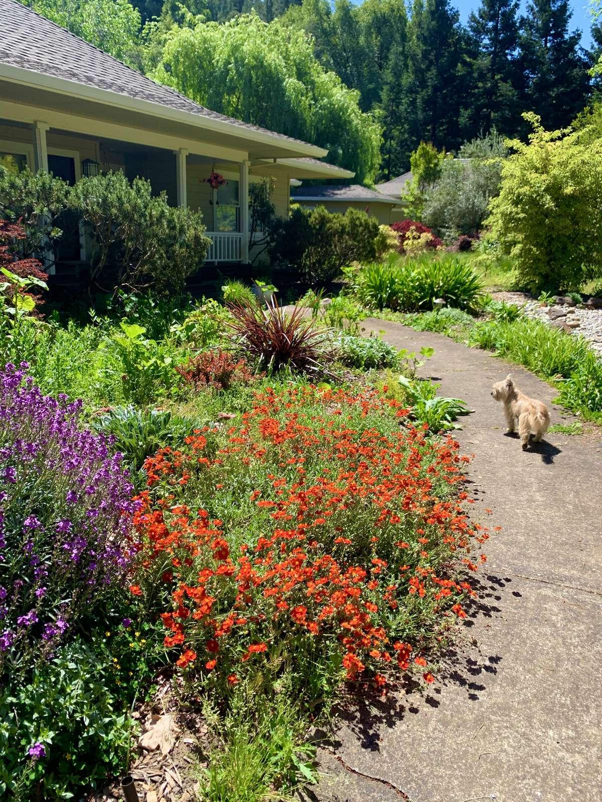 Lovely gardens & pet friendly