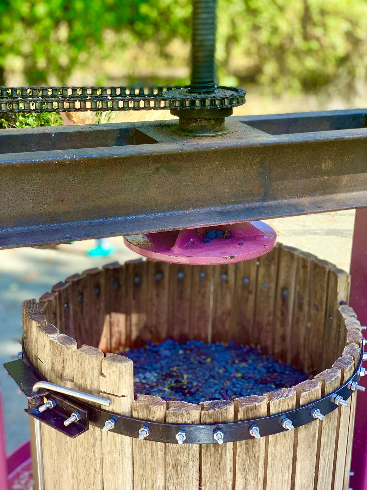 Ready to press the grapes!