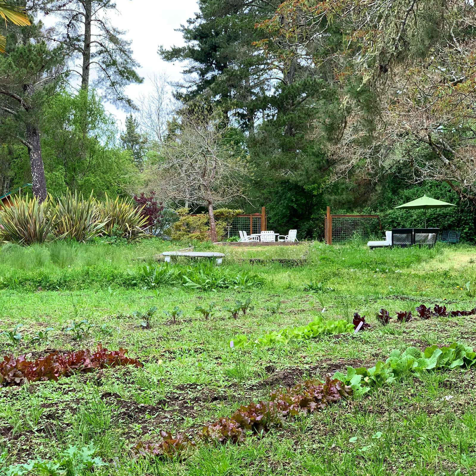 Help yourself to fresh vegetables from our Estate garden