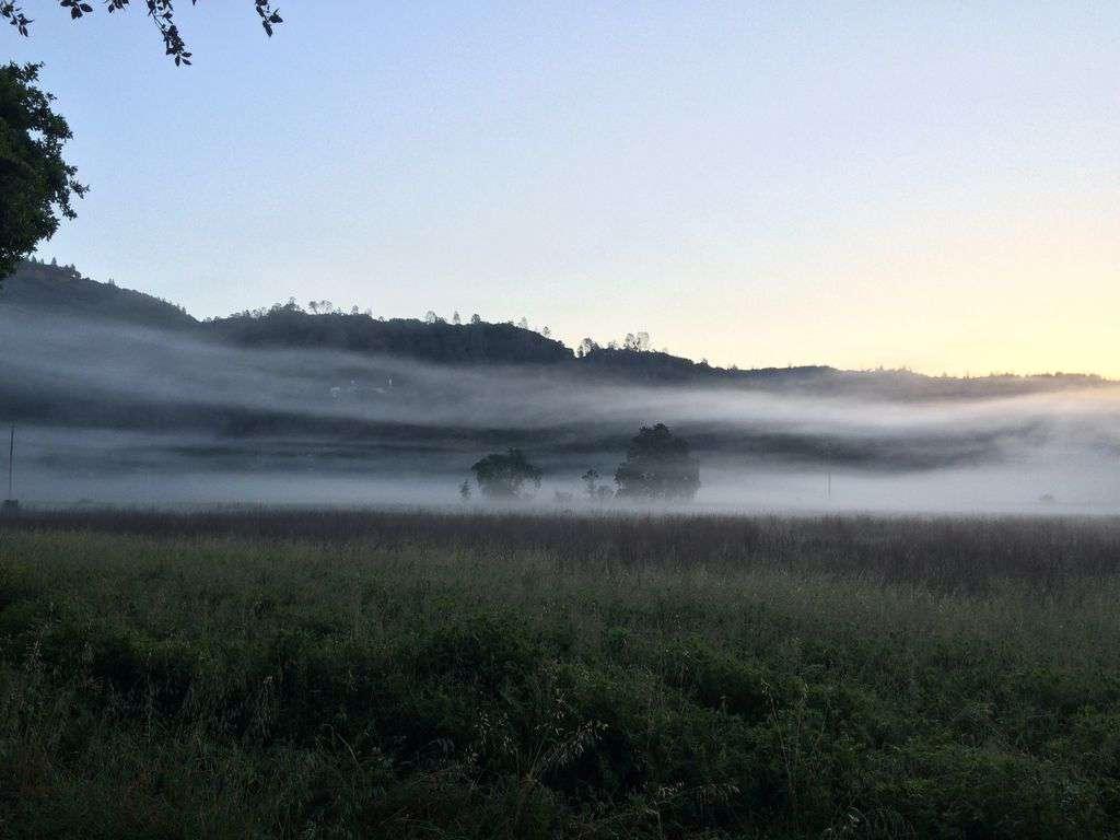 Morning vineyard views