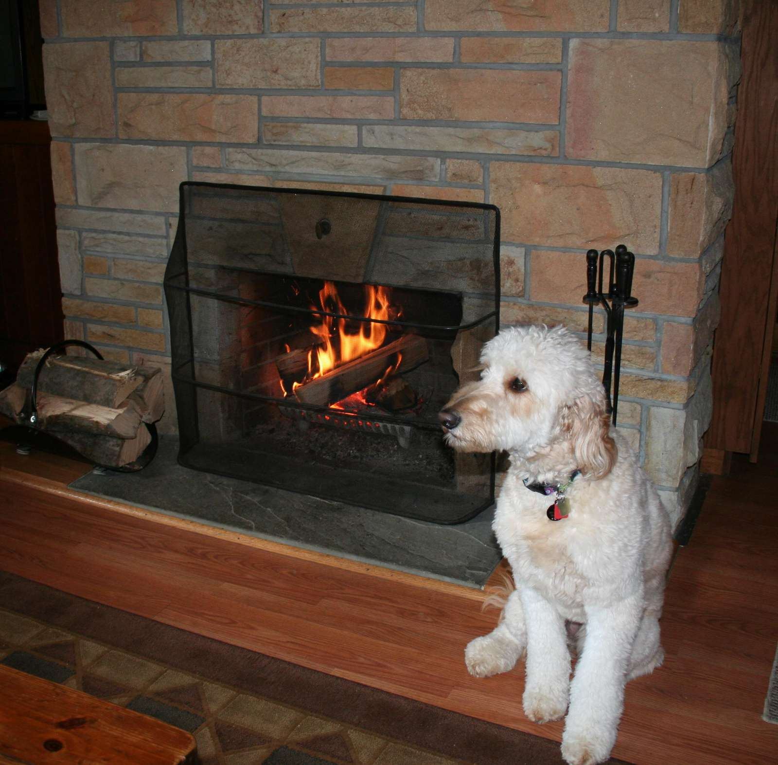 """Pearl"" in front of Fireplace"