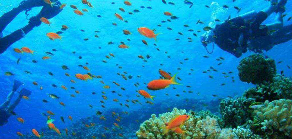 Nearby Looe Key is World Famous Diving and Snorkeling let us help you plan