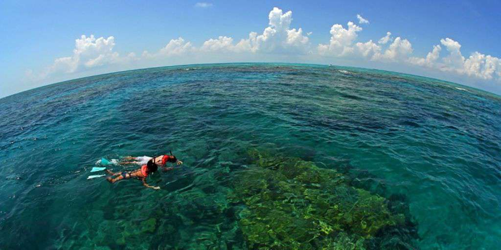 Snorkeling on our Reefs are second to none let us help you plan your adventure