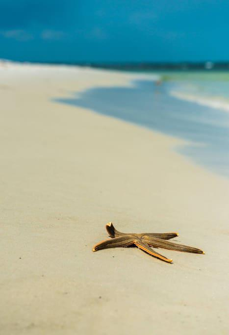 Starfish want's you to come on down to PCB!