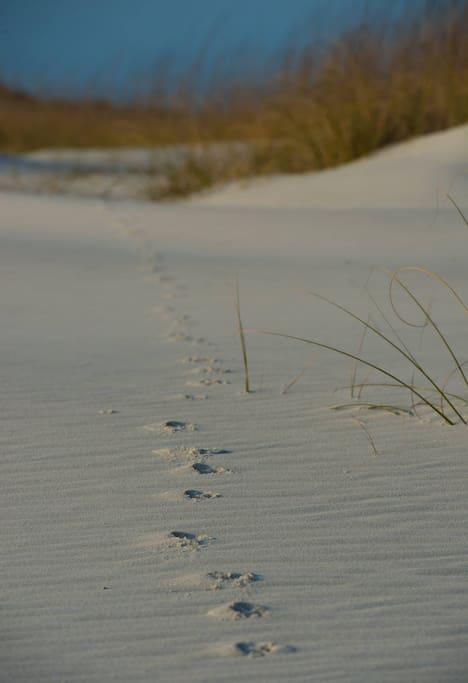 Footprints in the Sand!