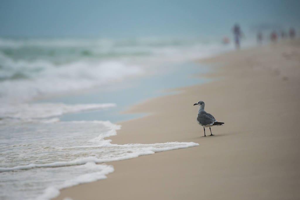 Sea Gulls walking in the surf