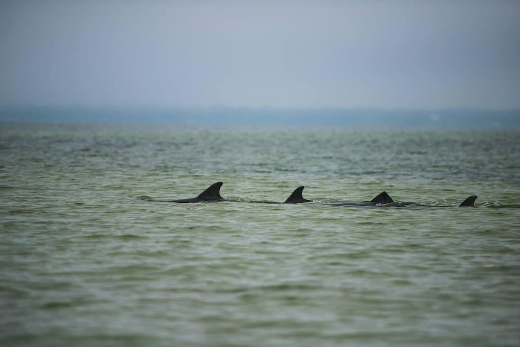 Dolphin family in the bay