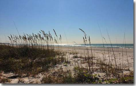 Sea Oats on the Private Beach