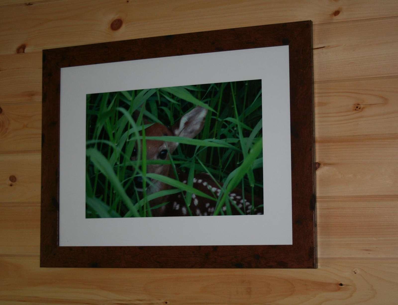 Deer Photo on Wall in 3rd Bedroom