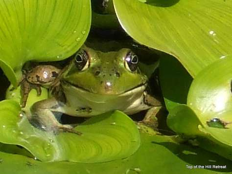 Peek A Boo from the pond